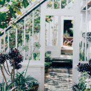 planten home decoration