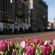 tulpen amsterdam