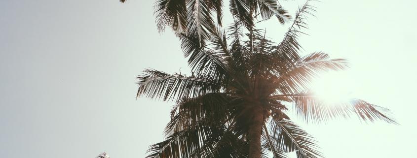 zomer palmboom